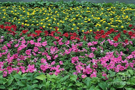 Danielle Groenen - Beautiful Beijing Garden