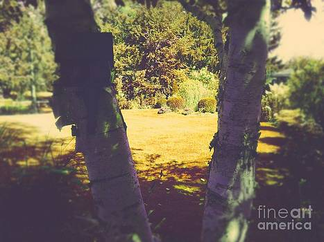 Beautiful Birches  by Cindy McClung