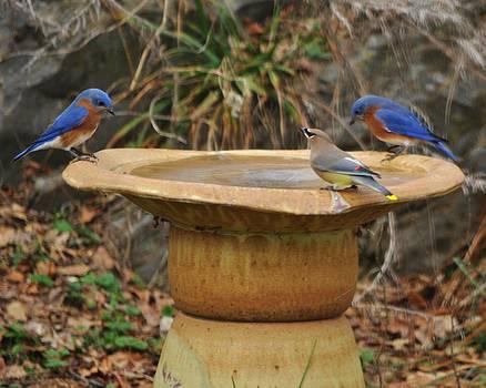 Beautiful Birds Having a Drink by William Fox