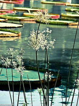 Beautiful blue day by Kornrawiee Miu Miu