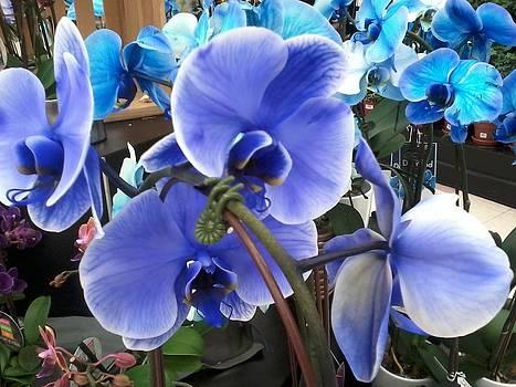 Beautiful Blue by Vickie G Buccini