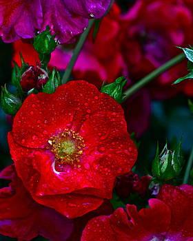 Frozen in Time Fine Art Photography - Beautiful Bouquet