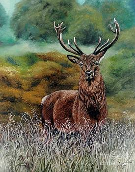 Beautiful buck by Amanda Hukill