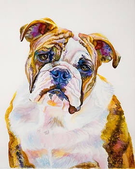 Beautiful Bulldog by Janine Hoefler