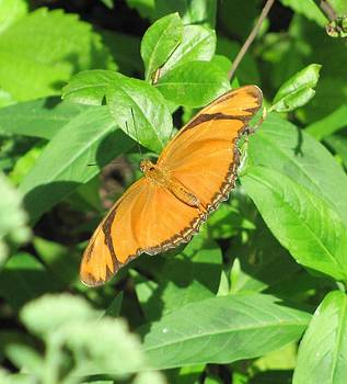 Beautiful butterflies  by Daisy Morales