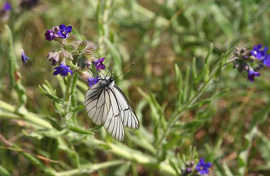 Dreamland Media - Beautiful Butterfly in Vegetation
