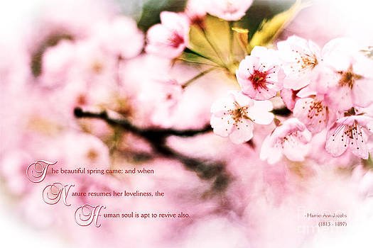 Beverly Claire Kaiya - Beautiful Cherry Blossoms in Spring When Nature Resumes Her Love