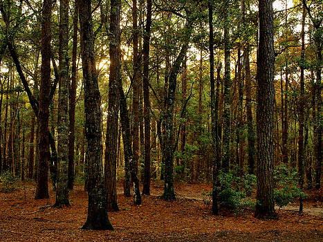 Beautiful Coastal Woodland by Kathleen Palermo