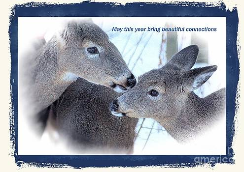 Beautiful Connection  by Tabatha Knox