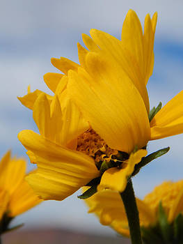 Beautiful Daisy by Justyne Moore