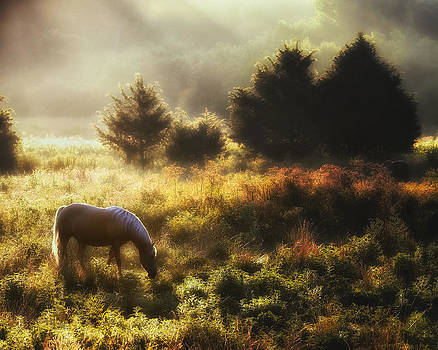 Beautiful Dawn by Ron  McGinnis