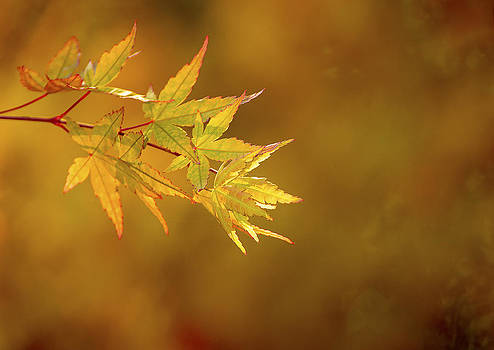 Paul W Sharpe Aka Wizard of Wonders - Beautiful Fall Day