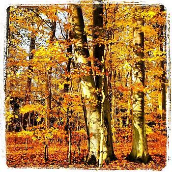 Beautiful Fall by Penny McClintock