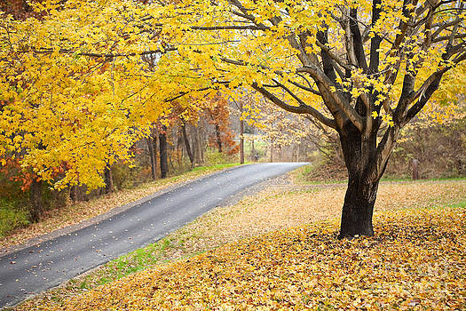 Beautiful Fall Scene by Sharon Dominick