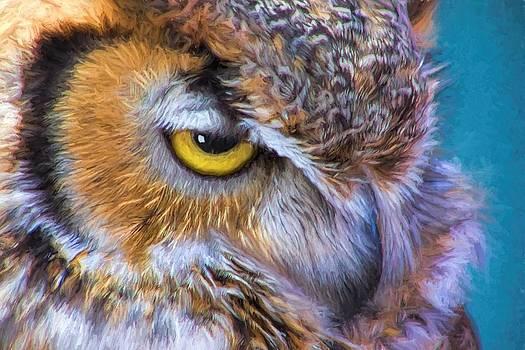Beautiful Great Horned Owl Bird Golden Eye by Tracie Kaska
