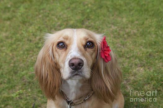 Beautiful Maisie by Diane Macdonald