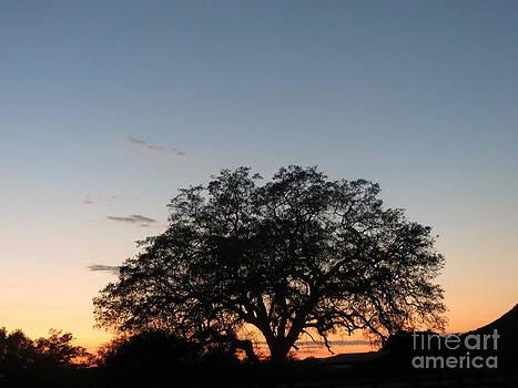Beautiful Oak Sunset by Jodie  Scheller