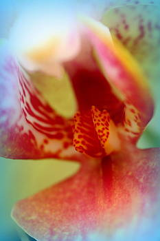 Beautiful Orchid by Jacqui Collett