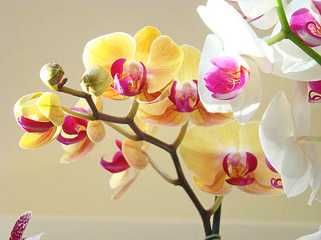 Baslee Troutman - Beautiful Orchids Floral art Prints Orchid Flowers