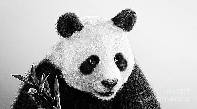 Beautiful Panda Black And White 3 by Boon Mee