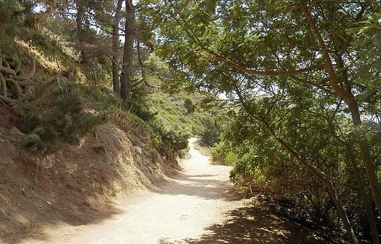 Beautiful Pathway El Canelo Chile by Ronald Osborne