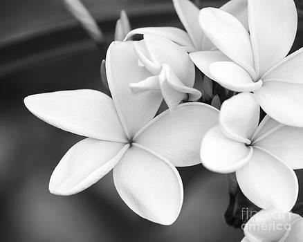 Sabrina L Ryan - Beautiful Plumeria in Black and White