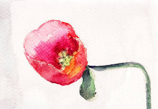 Beautiful Poppy flower by Regina Jershova