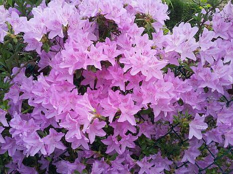 Beautiful Purple by Theresa Crawford