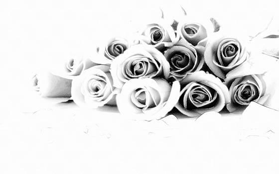 Beautiful Roses by Subesh Gupta