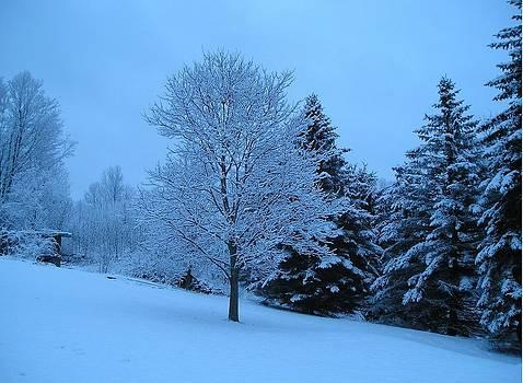 Beautiful Snowfall by Liz Lare