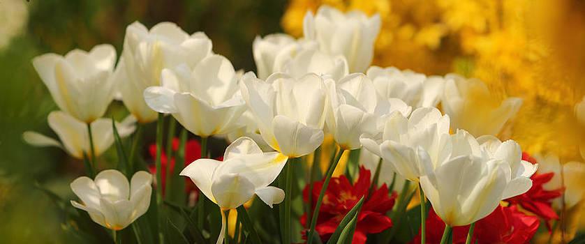 Beautiful Spring by Marc Huebner