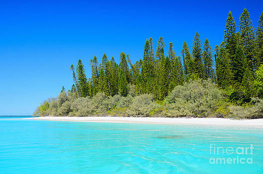 Beautiful tropical sea - beautiful beach - beautiful trees - beautiful sky by David Hill