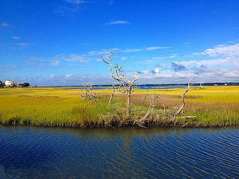 Beautiful View Topsail Island by Joan Meyland