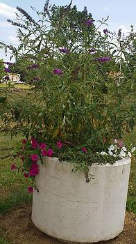 Beautiful Violet and Purple Flowers in Large Planter by Thelma Harcum