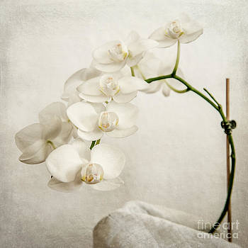 Beautiful white orchid II by Hannes Cmarits