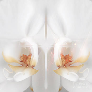 Beverly Claire Kaiya - Beautiful White Orchids
