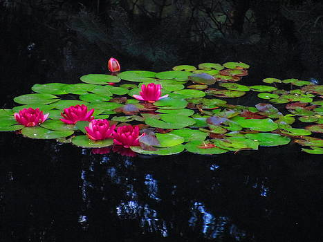 Beauty Floats on the Water by Elaine Haakenson