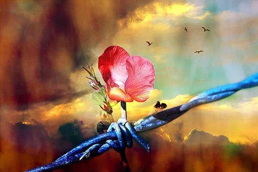 Beauty from Adversity by Paula Ayers