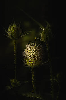 Beauty From The Beast by Paul Barson