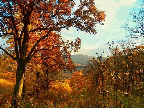 Beauty in the Valley by Joyce Kimble Smith