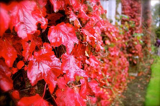 HweeYen Ong - Beauty of Red