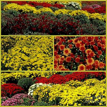Gail Matthews - Beauty of the Fall Mums