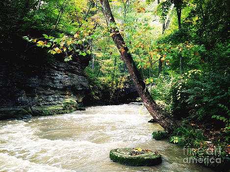 Rachel Barrett - Beauty of the River