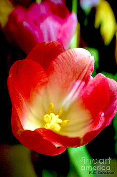 Beauty of Tulips by Rebecca Christine Cardenas
