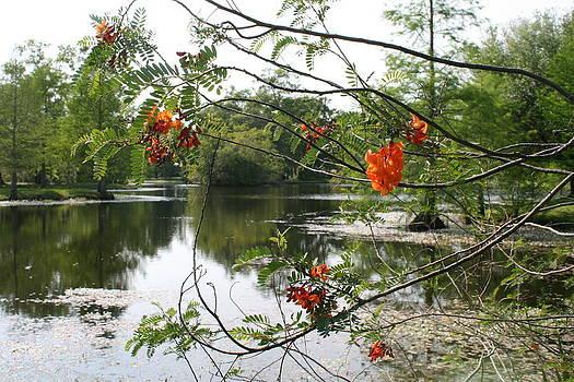 Beauty on the Lake by Bernadette Amedee