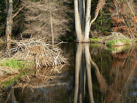 Beaver Lodge on Beaver Pond by Rob Huntley