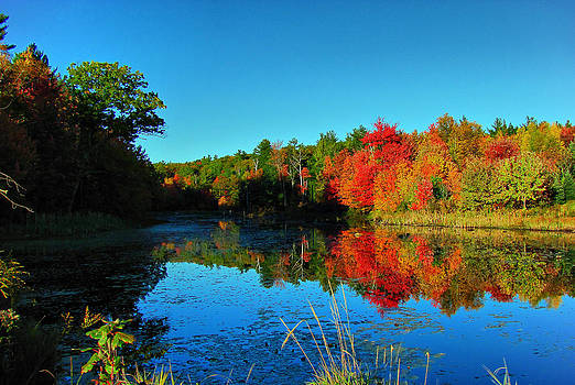 Beaver Pond Foliage by RockyBranch Dreams