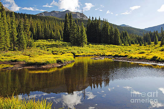 Beaver Pond in Colorado Summer by Lincoln Rogers