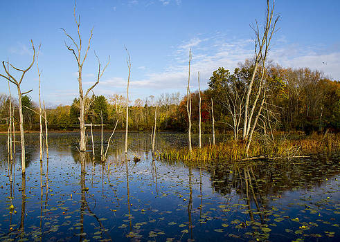 Beaver Pond Morning  by Tim Fitzwater