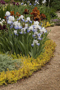 Beckoning Iris Garden by Nancy Myer